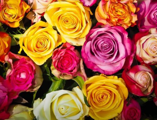 Blumenmeer zum Muttertag: Verlosung für ein Blumen-Geschenk