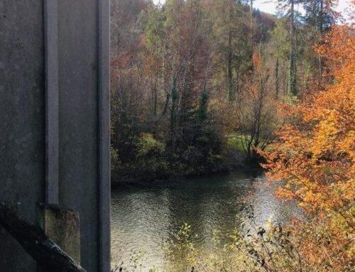 Waldzeit: Ronja Räubertochter spielen
